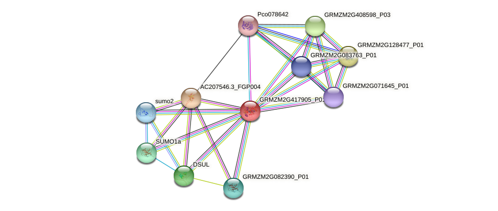 GRMZM2G417905_P01 protein (Zea mays) - STRING interaction network