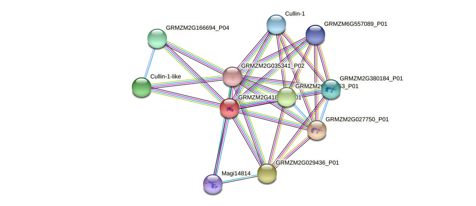 GRMZM2G418031_P01 protein (Zea mays) - STRING interaction network