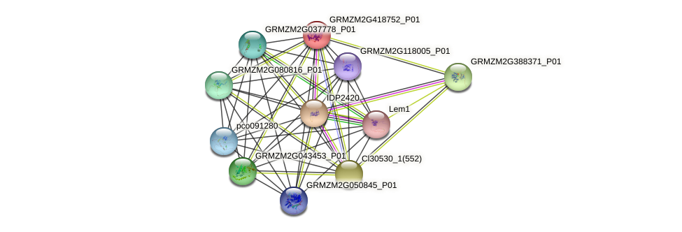 GRMZM2G418752_P01 protein (Zea mays) - STRING interaction network