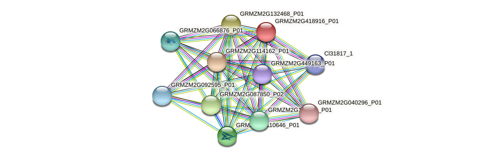 GRMZM2G418916_P01 protein (Zea mays) - STRING interaction network