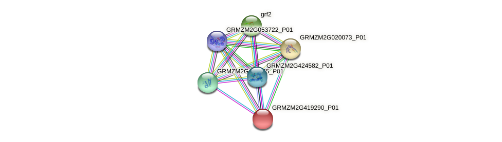 GRMZM2G419290_P01 protein (Zea mays) - STRING interaction network