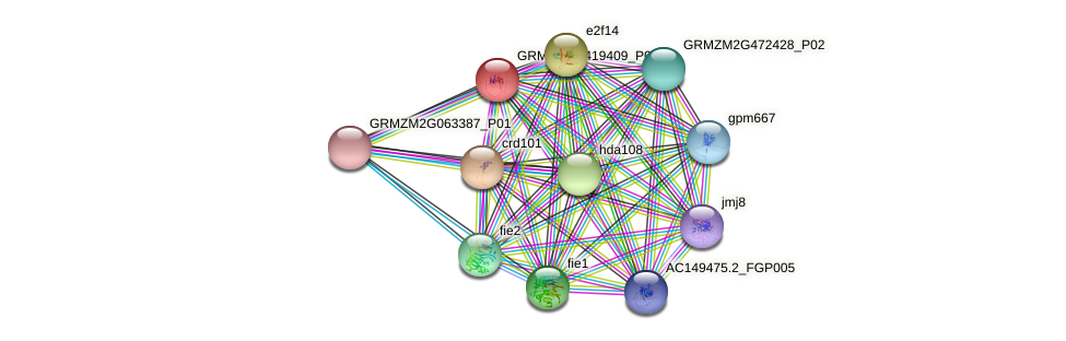 Zm.26418 protein (Zea mays) - STRING interaction network