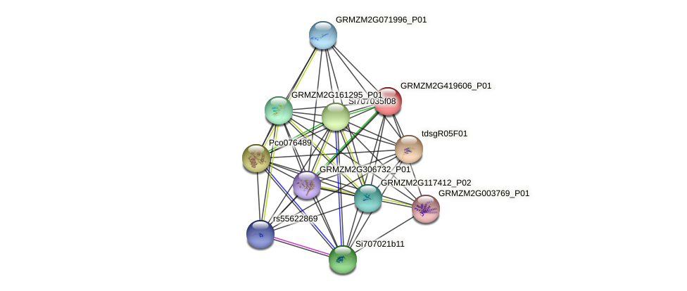 GRMZM2G419606_P01 protein (Zea mays) - STRING interaction network