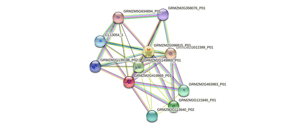 GRMZM2G419969_P01 protein (Zea mays) - STRING interaction network