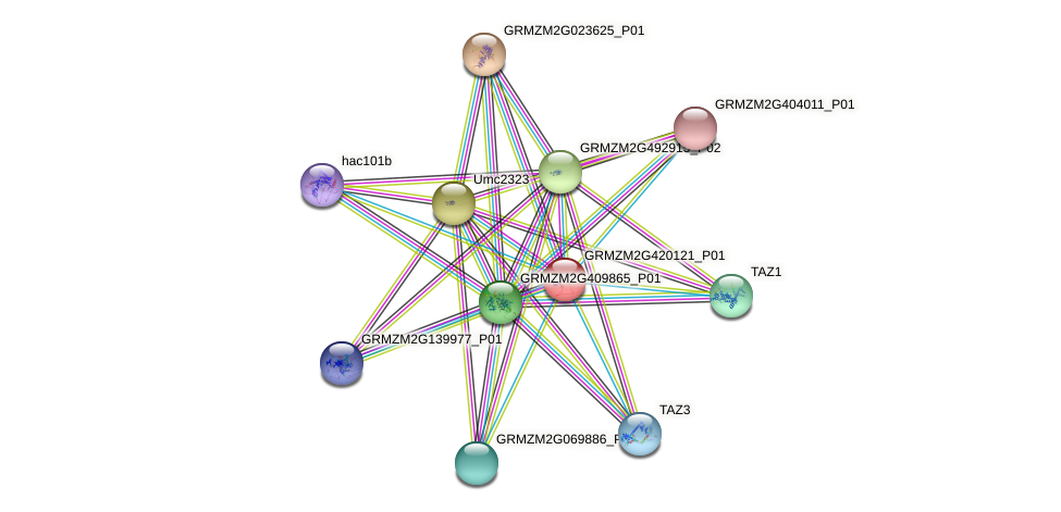 GRMZM2G420121_P01 protein (Zea mays) - STRING interaction network