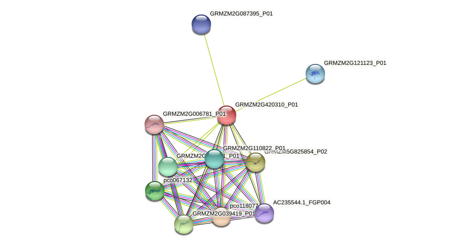 GRMZM2G420310_P01 protein (Zea mays) - STRING interaction network