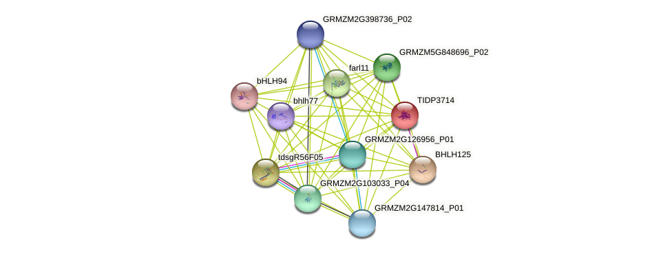 TIDP3714 protein (Zea mays) - STRING interaction network