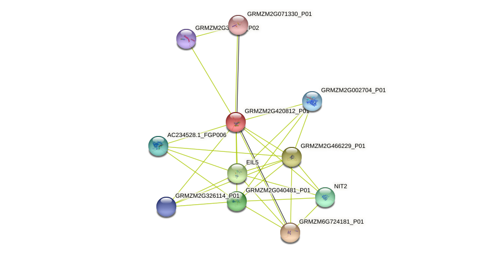 GRMZM2G420812_P01 protein (Zea mays) - STRING interaction network