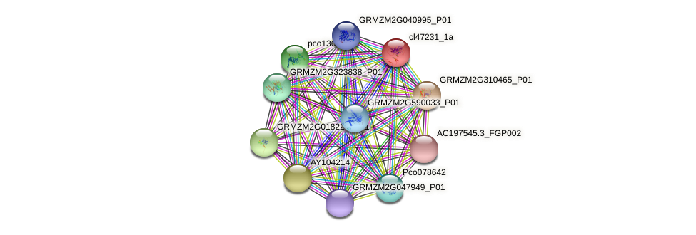 cl47231_1a protein (Zea mays) - STRING interaction network