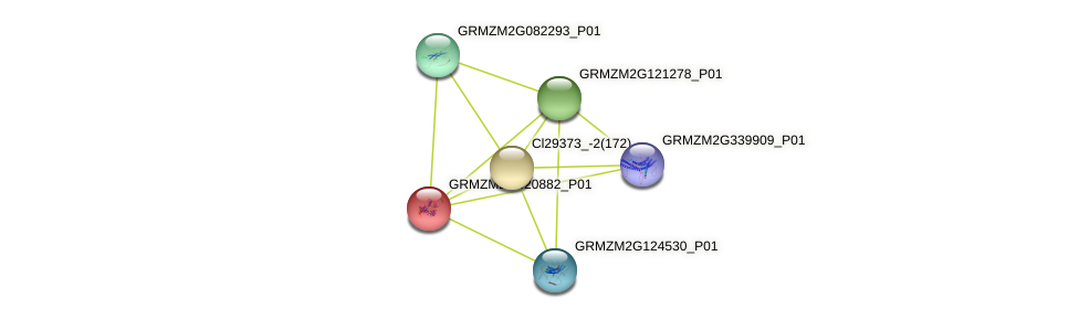 GRMZM2G420882_P01 protein (Zea mays) - STRING interaction network