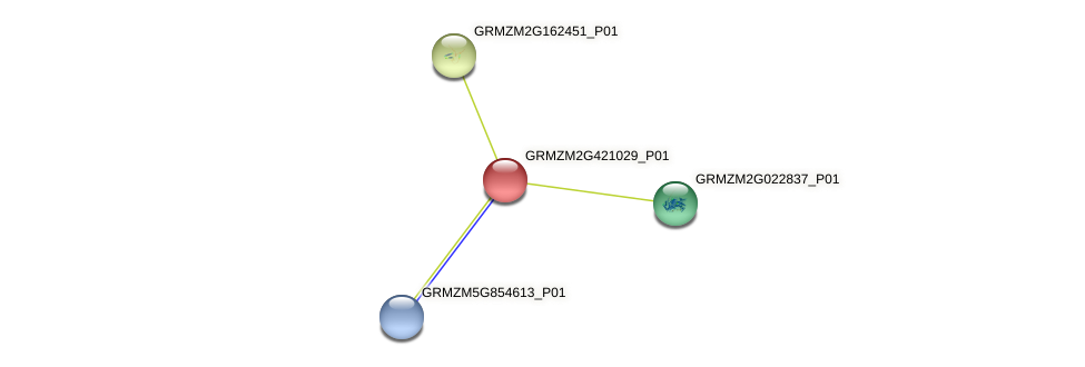 GRMZM2G421029_P01 protein (Zea mays) - STRING interaction network