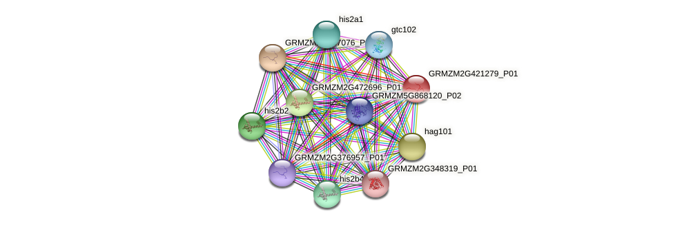 GRMZM2G421279_P01 protein (Zea mays) - STRING interaction network