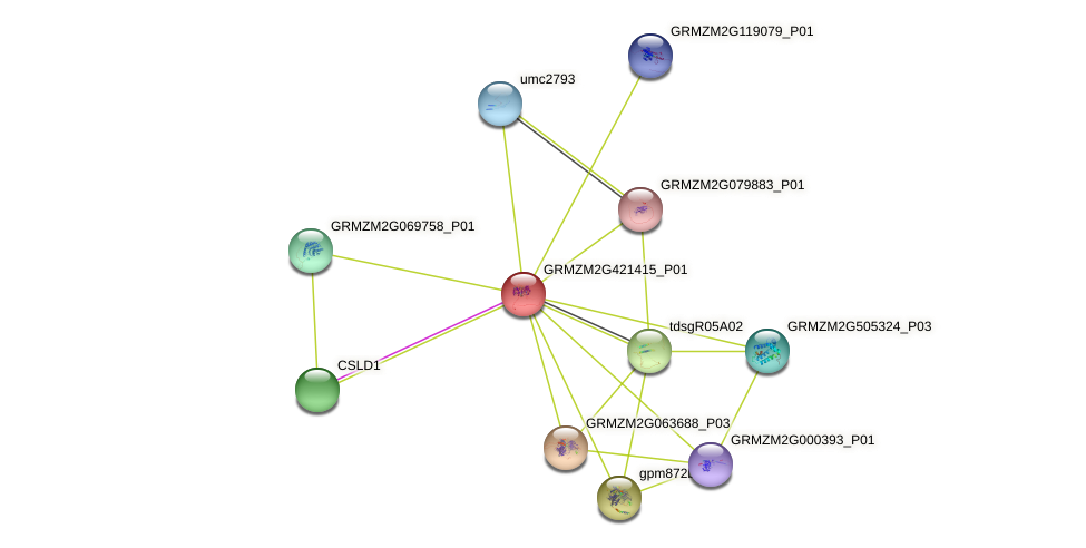 GRMZM2G421415_P01 protein (Zea mays) - STRING interaction network