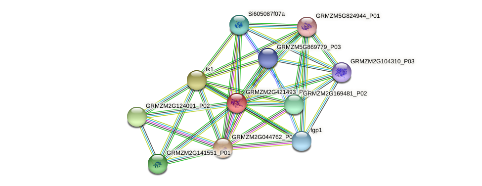 GRMZM2G421493_P01 protein (Zea mays) - STRING interaction network