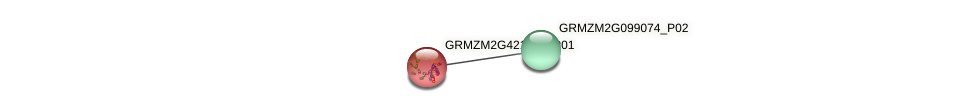 GRMZM2G421690_P01 protein (Zea mays) - STRING interaction network