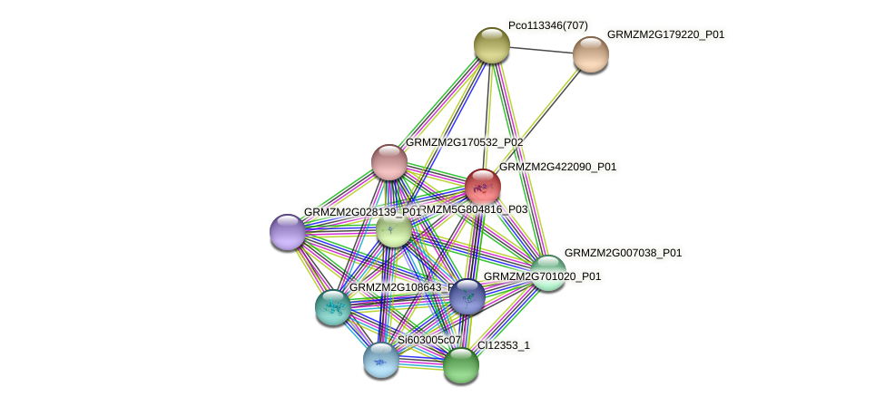 GRMZM2G422090_P01 protein (Zea mays) - STRING interaction network