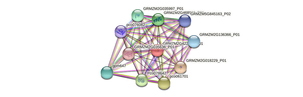 GRMZM2G422537_P01 protein (Zea mays) - STRING interaction network
