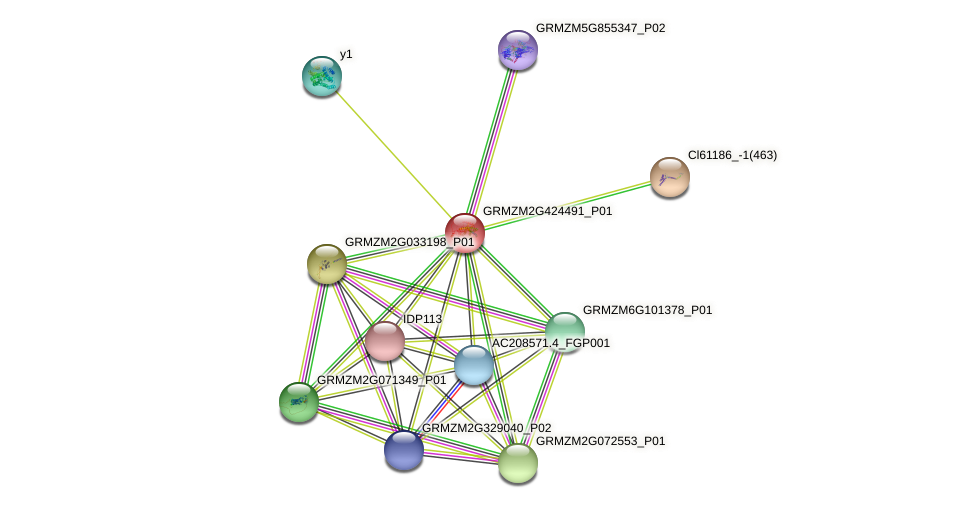 GRMZM2G424491_P01 protein (Zea mays) - STRING interaction network