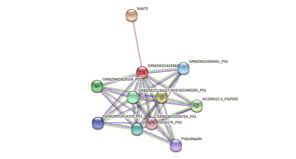 GRMZM2G424582_P01 protein (Zea mays) - STRING interaction network