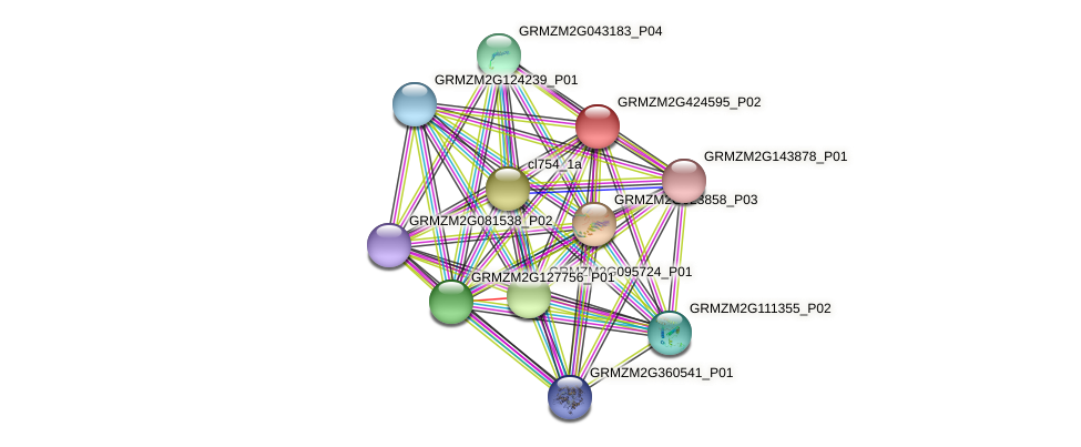 GRMZM2G424595_P02 protein (Zea mays) - STRING interaction network
