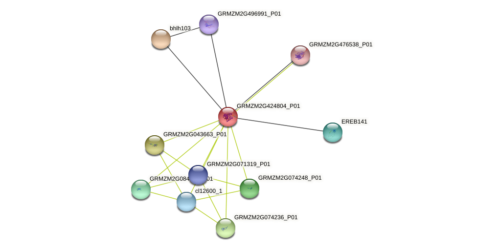 GRMZM2G424804_P01 protein (Zea mays) - STRING interaction network