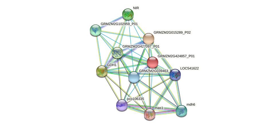 GRMZM2G424857_P01 protein (Zea mays) - STRING interaction network