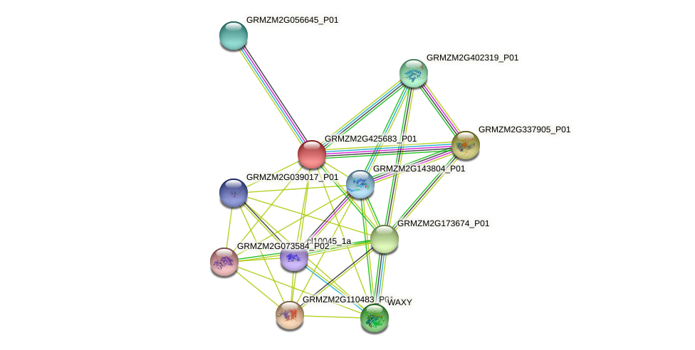 GRMZM2G425683_P01 protein (Zea mays) - STRING interaction network
