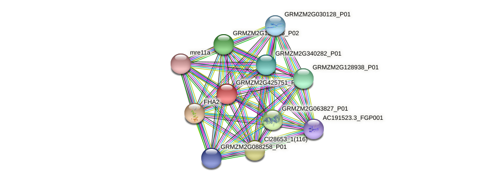GRMZM2G425751_P01 protein (Zea mays) - STRING interaction network