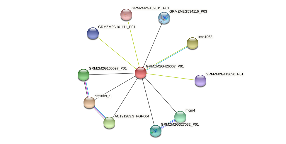 GRMZM2G426067_P01 protein (Zea mays) - STRING interaction network
