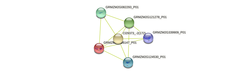GRMZM2G426147_P01 protein (Zea mays) - STRING interaction network