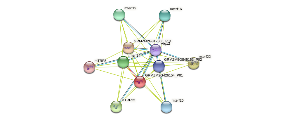 EMB2219 protein (Zea mays) - STRING interaction network