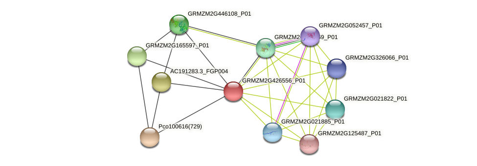 GRMZM2G426556_P01 protein (Zea mays) - STRING interaction network