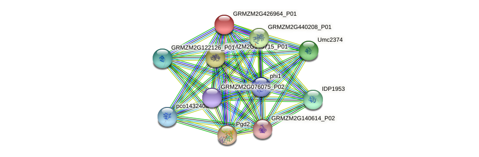 GRMZM2G426964_P01 protein (Zea mays) - STRING interaction network