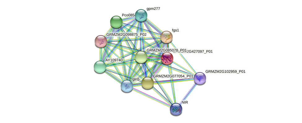 GRMZM2G427097_P01 protein (Zea mays) - STRING interaction network