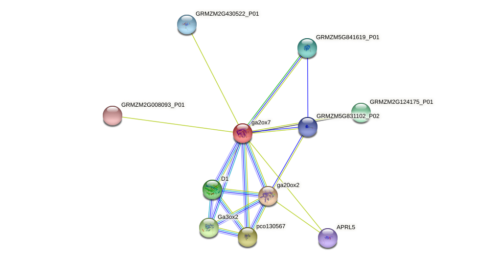 Zm.158772 protein (Zea mays) - STRING interaction network