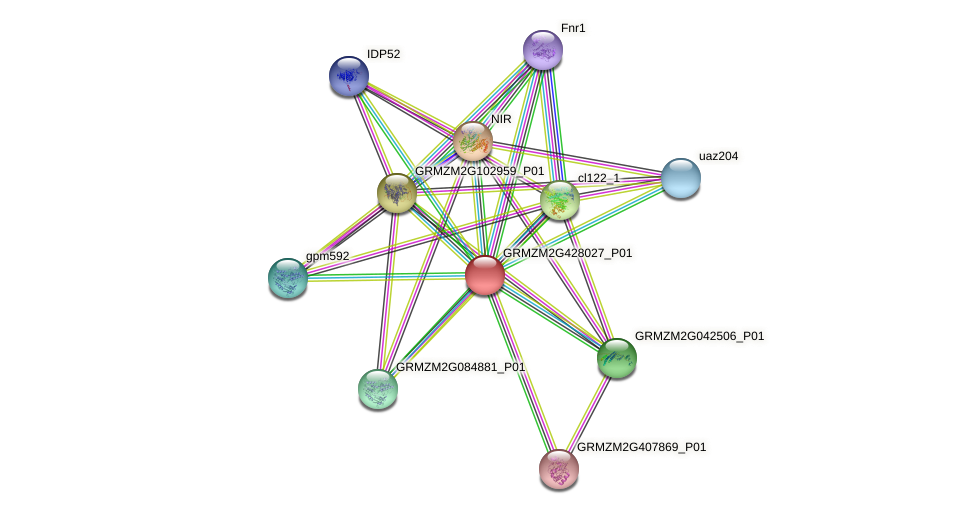 Zm.142337 protein (Zea mays) - STRING interaction network