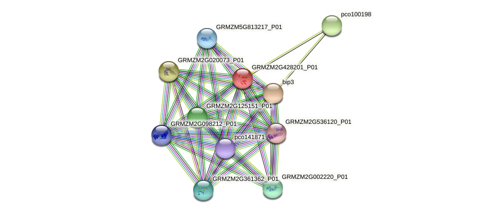 GRMZM2G428201_P01 protein (Zea mays) - STRING interaction network