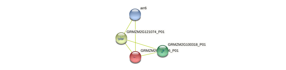GRMZM2G428356_P01 protein (Zea mays) - STRING interaction network