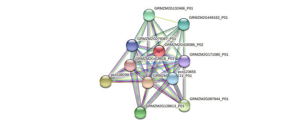 103646184 protein (Zea mays) - STRING interaction network