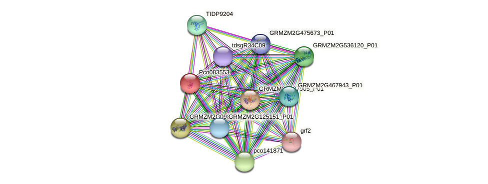 pco083553 protein (Zea mays) - STRING interaction network