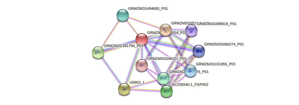 GRMZM2G428554_P01 protein (Zea mays) - STRING interaction network