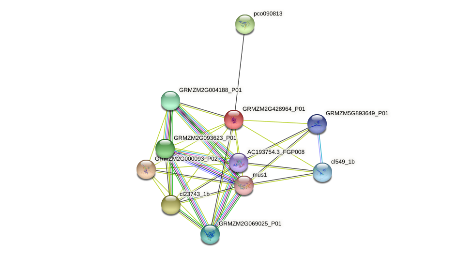 GRMZM2G428964_P01 protein (Zea mays) - STRING interaction network