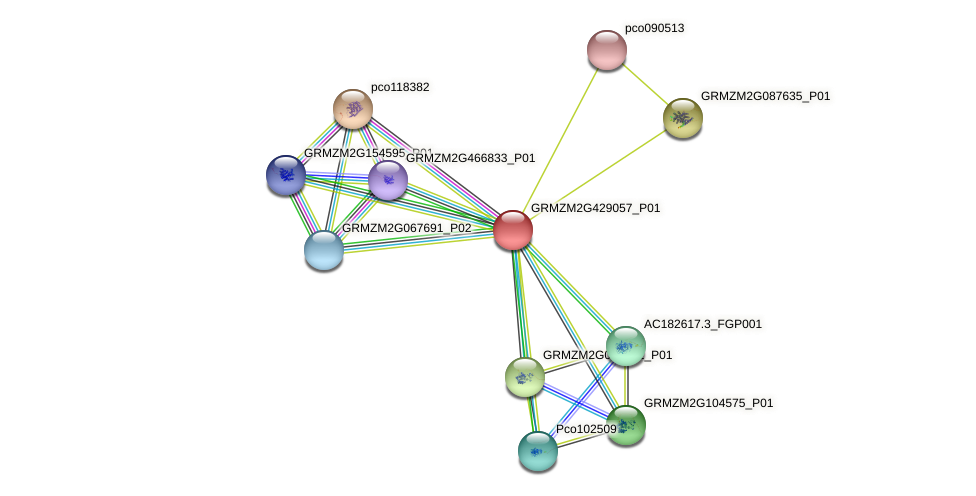 GRMZM2G429057_P01 protein (Zea mays) - STRING interaction network