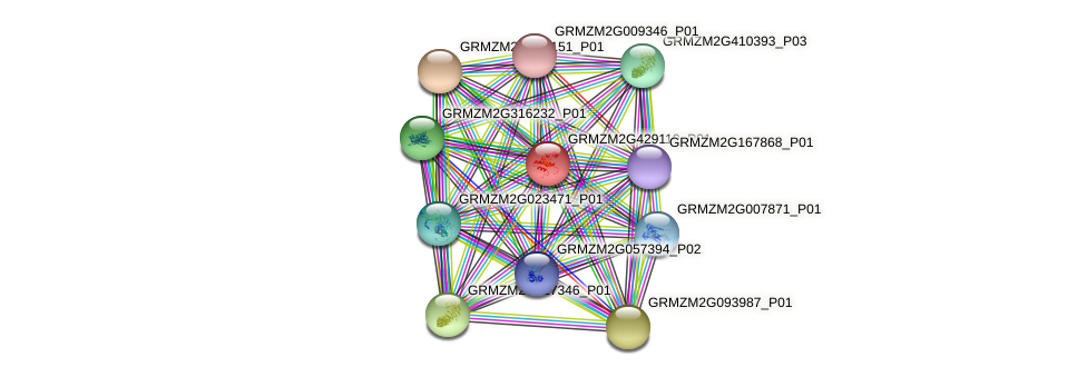 GRMZM2G429110_P01 protein (Zea mays) - STRING interaction network
