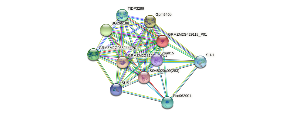 GRMZM2G429118_P01 protein (Zea mays) - STRING interaction network