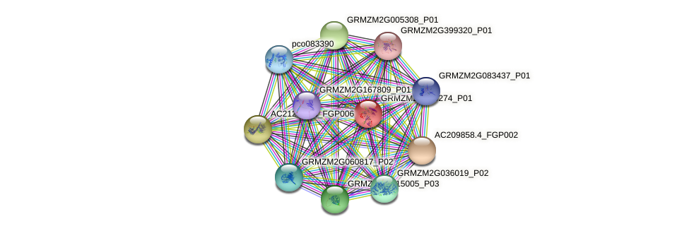 GRMZM2G429274_P01 protein (Zea mays) - STRING interaction network