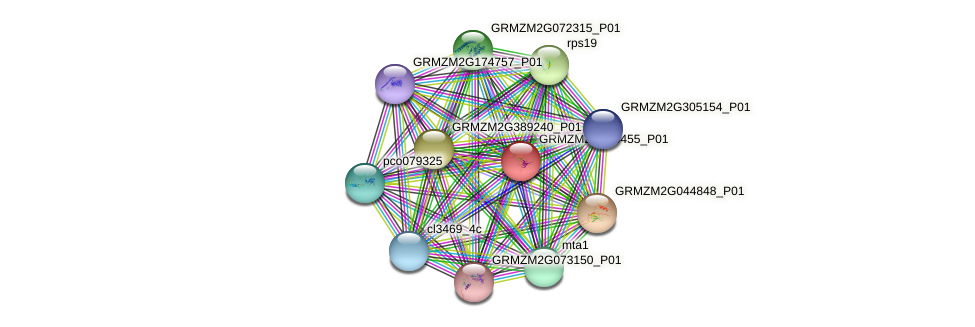 GRMZM2G430455_P01 protein (Zea mays) - STRING interaction network