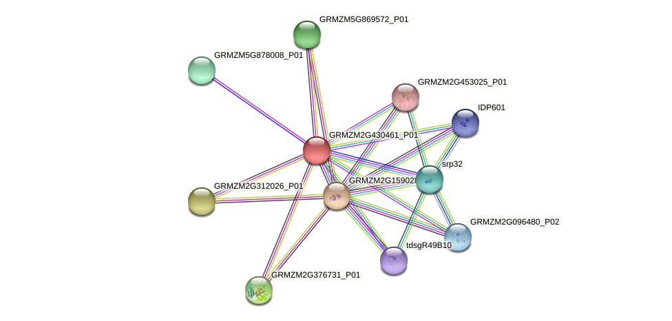 GRMZM2G430461_P01 protein (Zea mays) - STRING interaction network