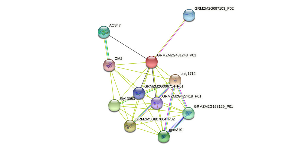 Zm.9880 protein (Zea mays) - STRING interaction network