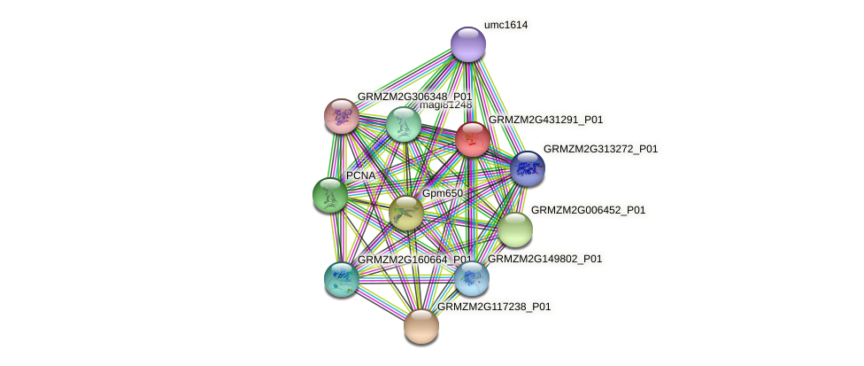 GRMZM2G431291_P01 protein (Zea mays) - STRING interaction network